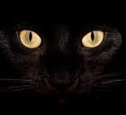 Normal black cat desktop wr