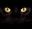 Thumb black cat desktop wr