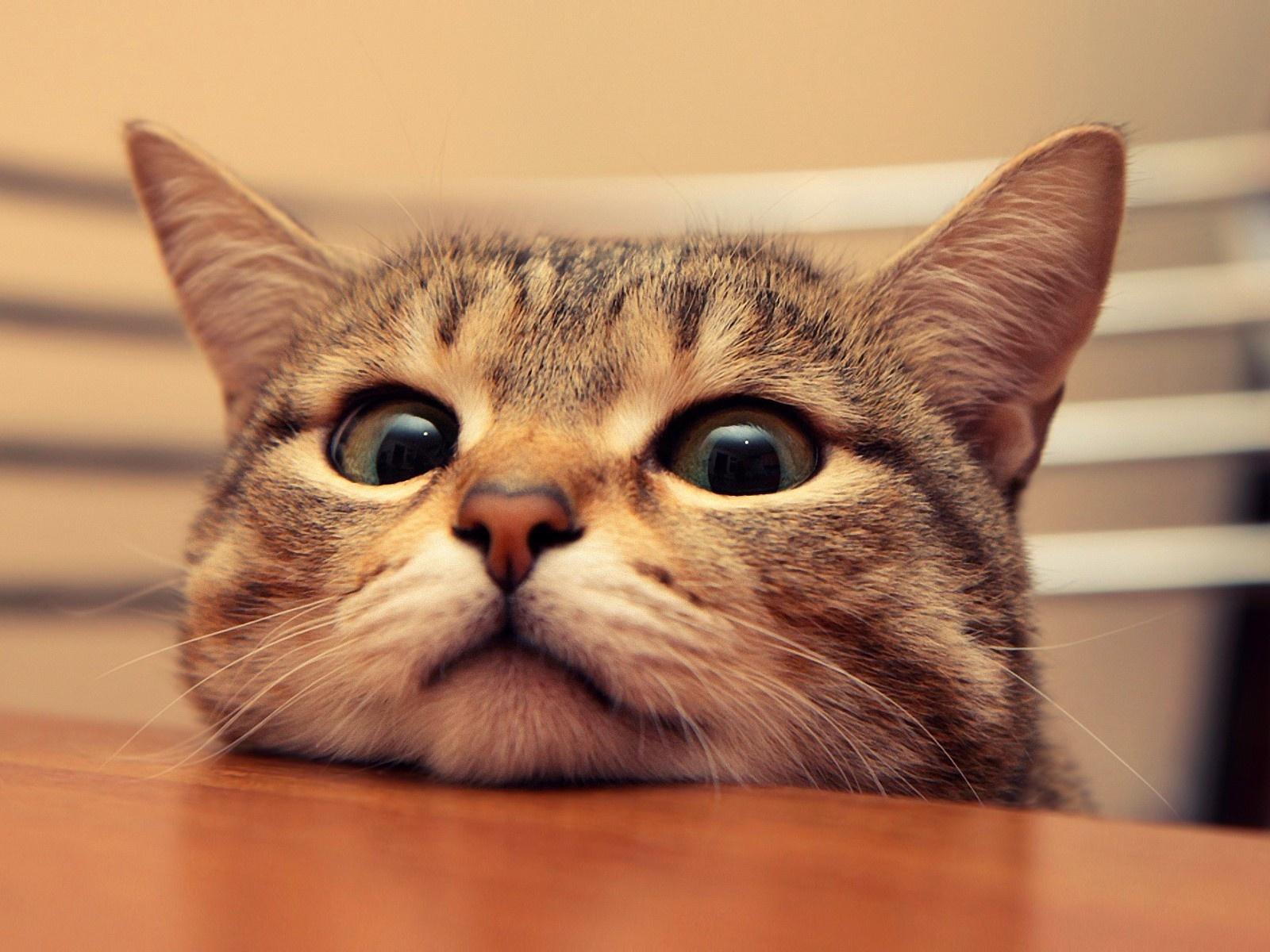 1600x1200 cute cat desktop pc and mac wallpaper