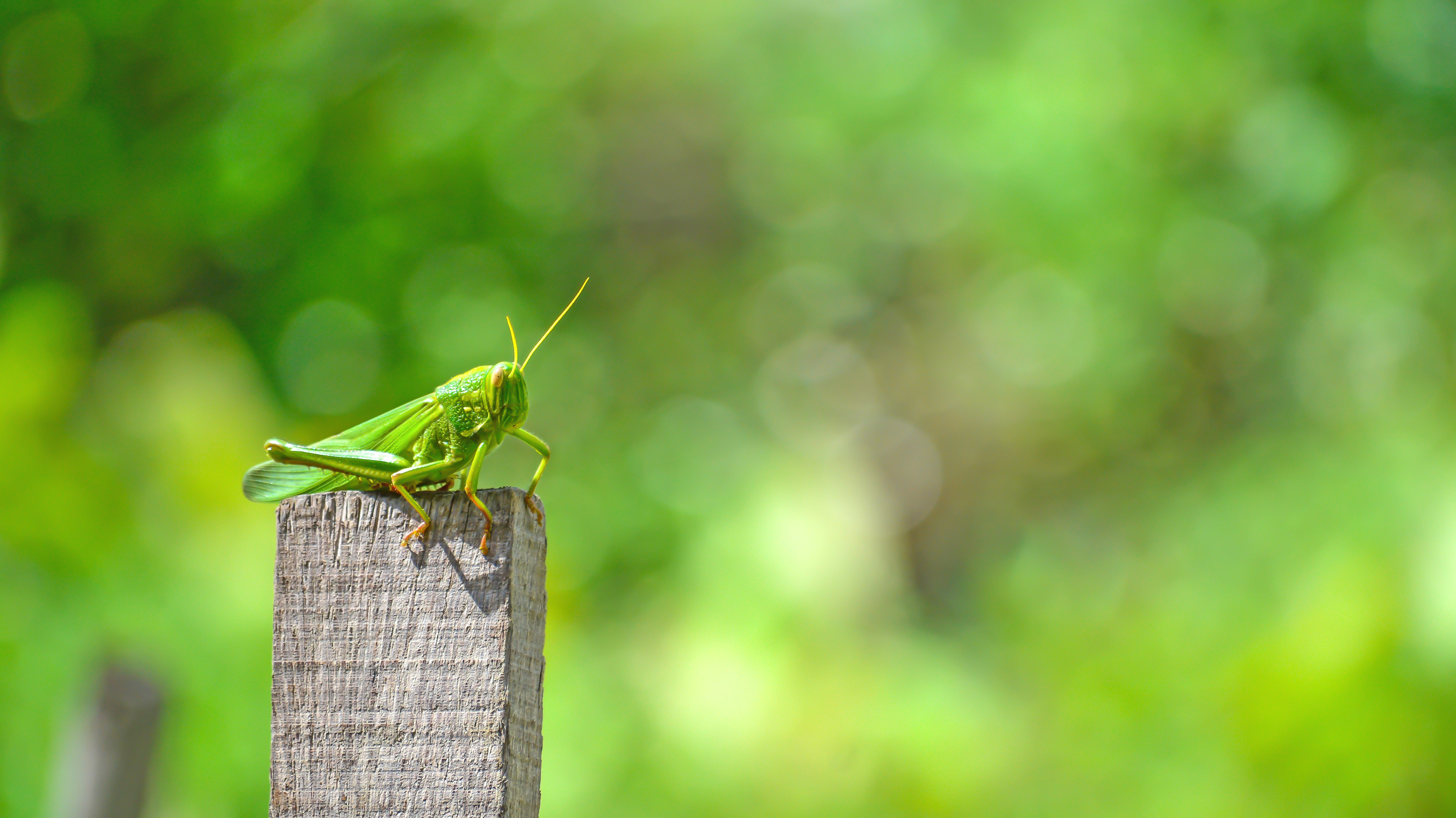 Nature grass branch sky field leaf flower animal wildlife green insect natural scenery fresh asia fauna invertebrate close up trees neck insects grasshopper vietnam folk macro photography rice fields grass tree cricket l